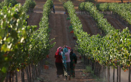 Jordan to Reclaim Israeli-Run Farms