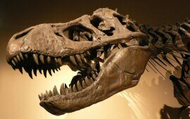 Dinosaurs, the Bible, and a 6,000-year-old Earth?